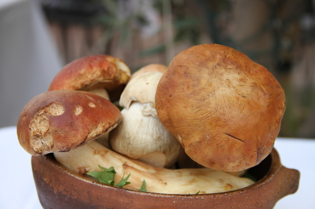 Porcini Mushrooms--Forage first then eat.