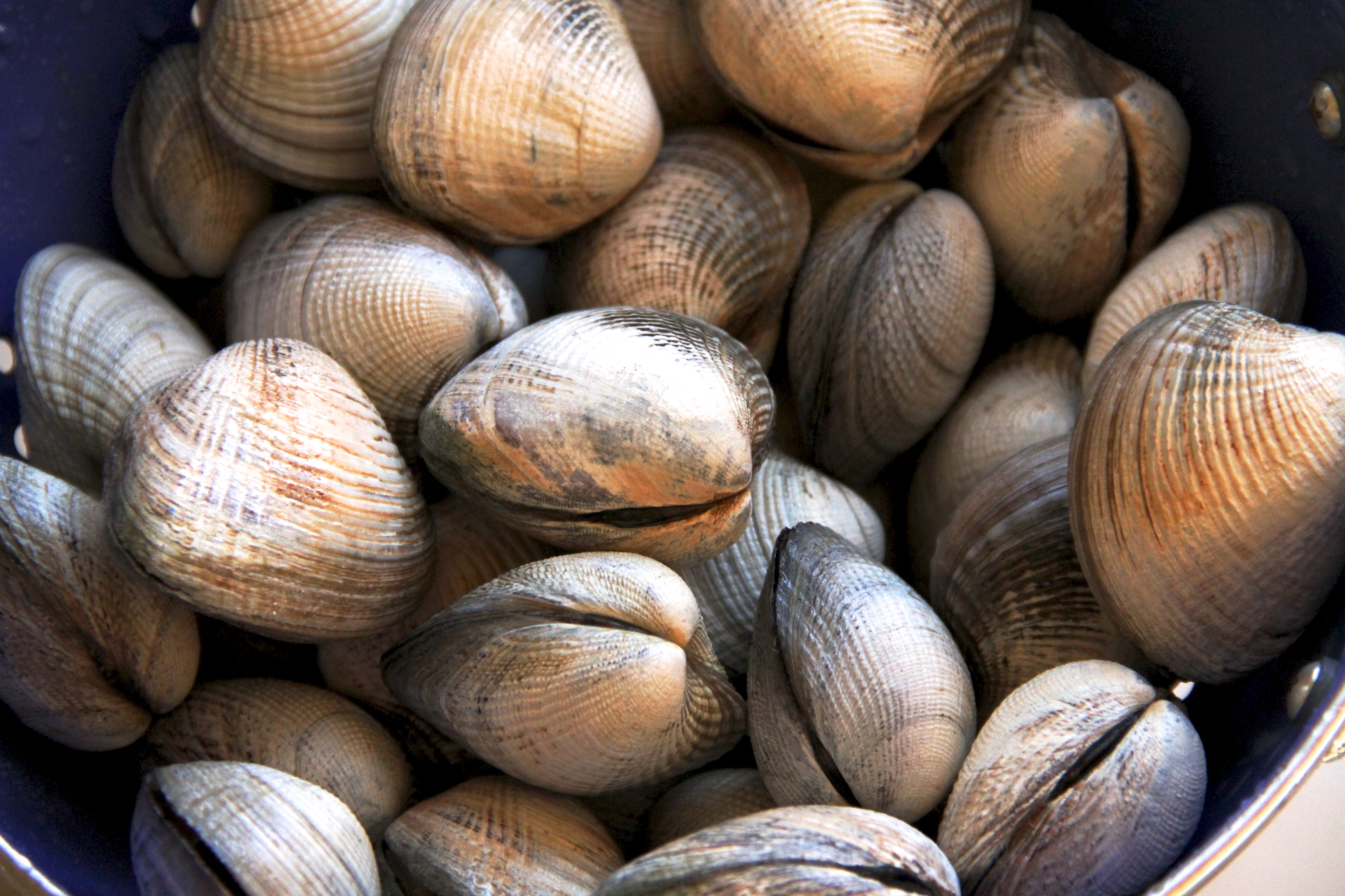 Manila Clams with North African Spices
